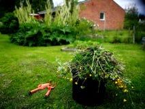 Jobb i trädgård Arkivbild
