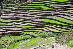 Jobstepp, der im uttaranchal Himalaja Indien bewirtschaftet Stockbild