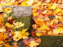 Jobstepp im Herbst Lizenzfreie Stockbilder