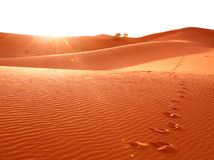Jobstepp im Wüstensand Lizenzfreies Stockbild