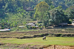 Jobstepp-Reis Feld in Thailand Stockbild