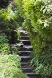 Jobstepps durch den Garten Stockbilder