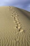 Jobstepps im Sand, der zum Horizont ausdehnt Abdrücke im Sand Gobi-Wüste, Mongolei Stockfotos