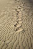 Jobstepps im Sand, der zum Horizont ausdehnt Abdrücke im Sand Gobi-Wüste, Mongolei Stockfoto