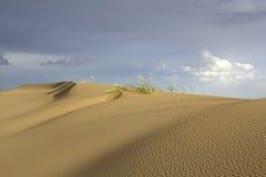 Jobstepps im Sand, der zum Horizont ausdehnt Gobi-Wüste, Mongolei Stockfotografie