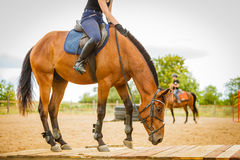 Jockey κορίτσι που κάνει την ιππασία στο λιβάδι επαρχίας Στοκ εικόνα με δικαίωμα ελεύθερης χρήσης