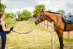 Jockey νέα γυναίκα που παίρνει το άλογο έτοιμο για το γύρο Στοκ φωτογραφία με δικαίωμα ελεύθερης χρήσης