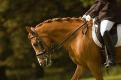 Jockey auf einem schönen Pferd Stockfotografie