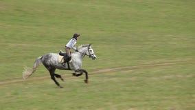 Jockey auf Pferd im Galopp stock video