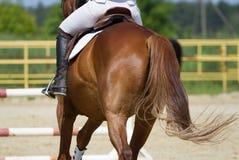 Jockey berijdende laars Royalty-vrije Stock Foto