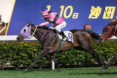 Jockey Brett Prebble in Hong Kong Royalty-vrije Stock Fotografie