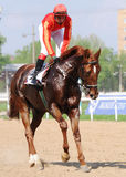 Jockey on a chestnut racehorse. Jockey on a red racehorse before a race on hippodrome Stock Images