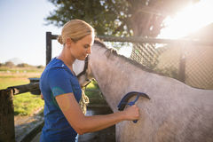 Jockey cleaning horse with sweat scraper at barn Stock Image