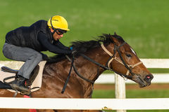 Jockey Closeup Running Track de cheval de course Images libres de droits
