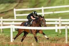 Jockey Closeup Running Track de cheval de course photos libres de droits