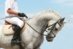 Jockey on dressage horse Stock Image