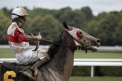 Jockey Eddie Castro aboard Happy Now Stock Photography