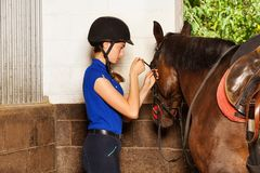 Jockey girl fitting bridle on bay horse at stables Stock Photos