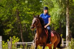 Jockey girl training horse at racetrack in summer. Portrait of jockey girl training bay horse at racetrack in summer Royalty Free Stock Photos