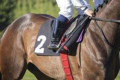 Jockey in het zadel bij een paardenkoers met het beginnende aantal tw Stock Fotografie