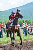 Jockey on horse befor the start Stock Image