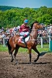 Jockey with horse befor the start Royalty Free Stock Photos
