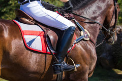 Jockey and horse Stock Images