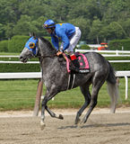 Jockey John Velazquez and Paraiba Stock Image