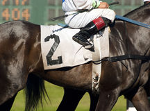 Jockey Leads Number Two Horse to Start Gate at Horserace stock photos