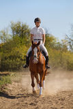 Jockey med purebredhästen Fotografering för Bildbyråer
