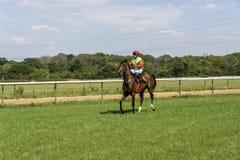 Jockey på kastanjebrun häst Arkivfoton