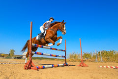 Jockey with purebred horse. Image of  female jockey with purebred horse, jumping a hurdle Royalty Free Stock Images