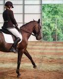 Jockey rides horse in arena Stock Photography