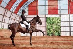 Jockey rides horse in arena Stock Photo