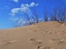 Jockey` s Ridge State Park arkivfoto