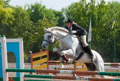 Jockey springt über eine Hürde Stockfoto