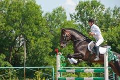 Jockey springt über eine Hürde Lizenzfreies Stockfoto