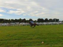 Jockey sur le cheval de course fonctionnant à la ligne d'arrivée photographie stock