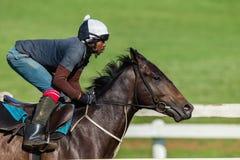 Jockey Training Closeup för lopphäst Royaltyfri Bild