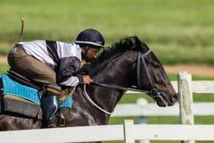 Jockey Training Closeup för lopphäst Arkivfoto