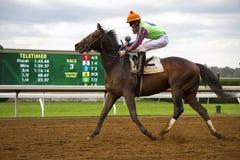 Jockey und Rennpferd trotten hinter Anzeigetafel in Kentucky Stockbild