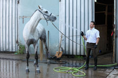 Jockey wash horse from hose Royalty Free Stock Photo
