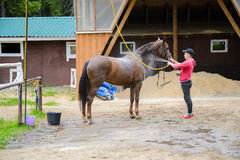 Jockey washes the horse with water. Stock Photography