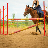 Jockey young girl doing horse jumping through hurdle Stock Image