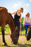 Jockey young girl petting brown horse. Taking care of animals, love and friendship concept. Jockey young girl petting brown horse on sunny day royalty free stock photos
