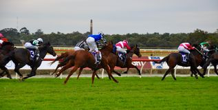 Jockeys Racing: Belmont Race Track royalty free stock photography