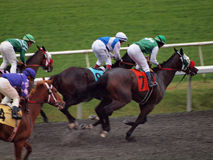 Jockeys stand on Horses as they race round track stock image