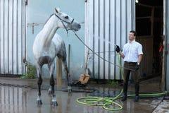 Jockeywashhäst från slangen Royaltyfri Foto