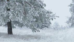 Jodła w śnieżnej drzewnej dzikiej lasowej Bożenarodzeniowej zimy gałęziasty snowing zbiory