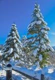 2 jodła z śniegiem Zdjęcie Stock